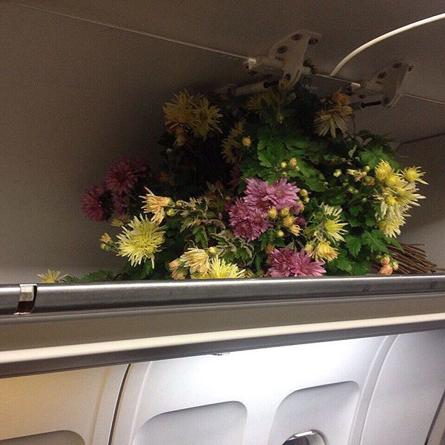 A gift from a vacation in Crimea, 2015 (flowers in the airplane's hold)